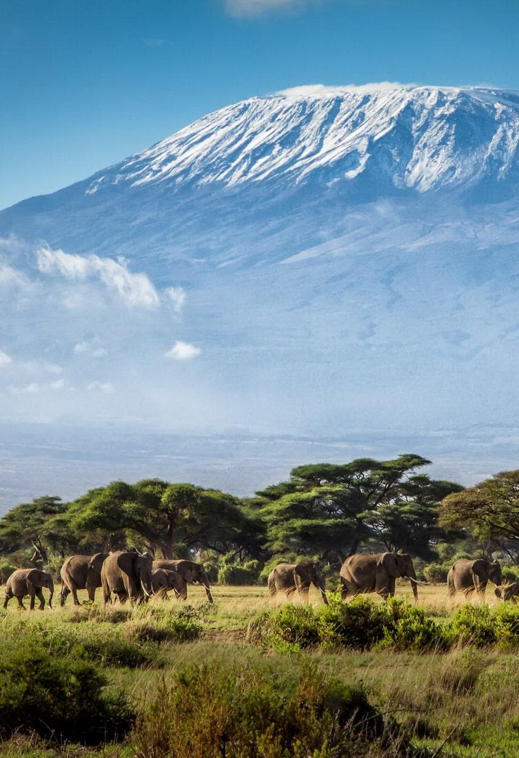 Nyika Discovery - Destinations - Kilimanjaro 10