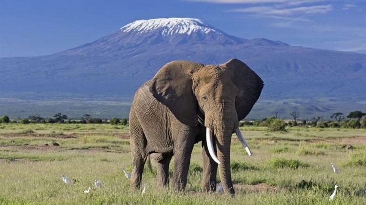 Nyika Discovery - Destinations - Kilimanjaro 3
