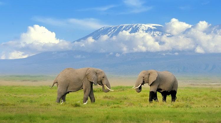 Nyika Discovery - Destinations - Kilimanjaro 5