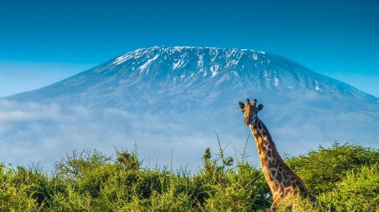 Nyika Discovery - Destinations - Kilimanjaro 7