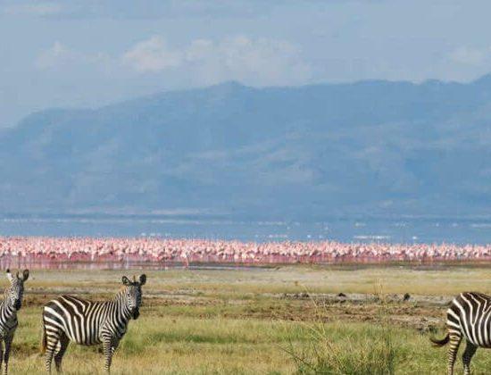 Nyika Discovery - Lake Manyara national park day trip 2