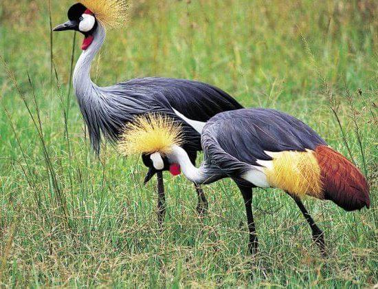 Nyika Discovery - Lake Manyara national park day trip 3