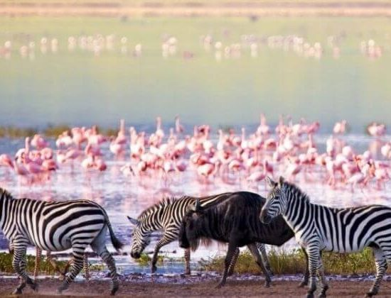 Nyika Discovery - Lake Manyara national park day trip 6