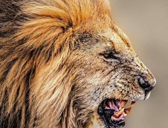 Nyika Discovery - Mto Wa Mbu cultural tour and Ngorongoro 2 day lodge safari 01