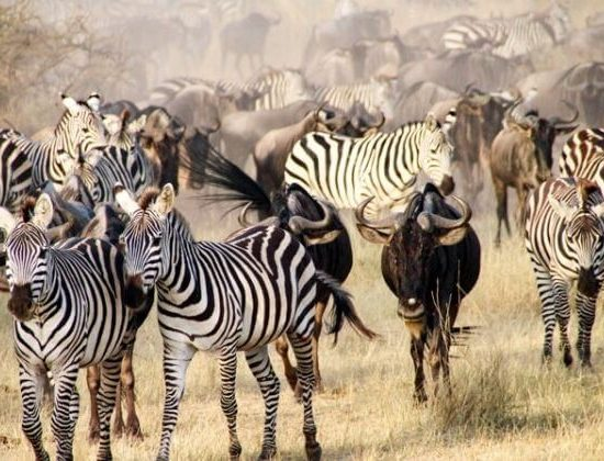 Nyika Discovery - Mto Wa Mbu cultural tour and Ngorongoro 2 day lodge safari 03