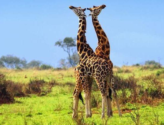 Nyika Discovery - Mto Wa Mbu cultural tour and Ngorongoro 2 day lodge safari 04