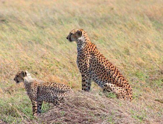 Nyika Discovery - Ngorongoro crater day trip 2