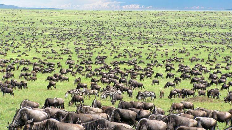 Nyika Discovery - Safari Destinations - Serengeti National Park 02