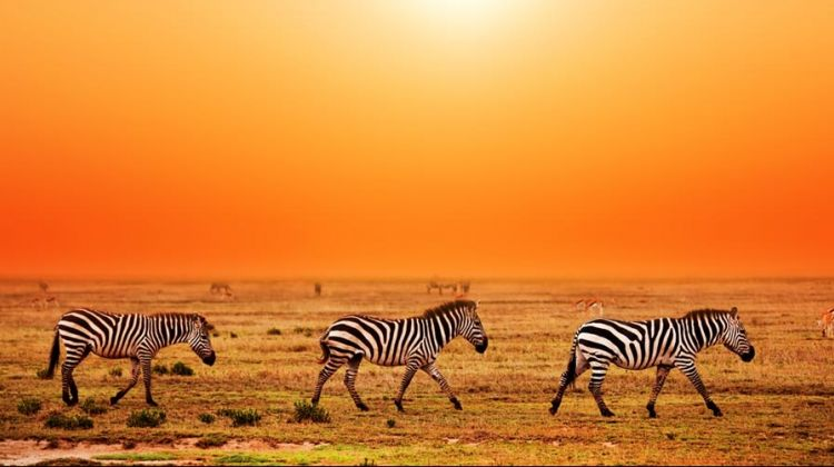 Nyika Discovery - Serengeti National Park 03