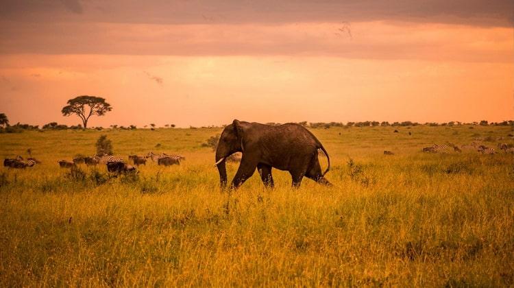 Nyika Discovery - Serengeti National Park 04
