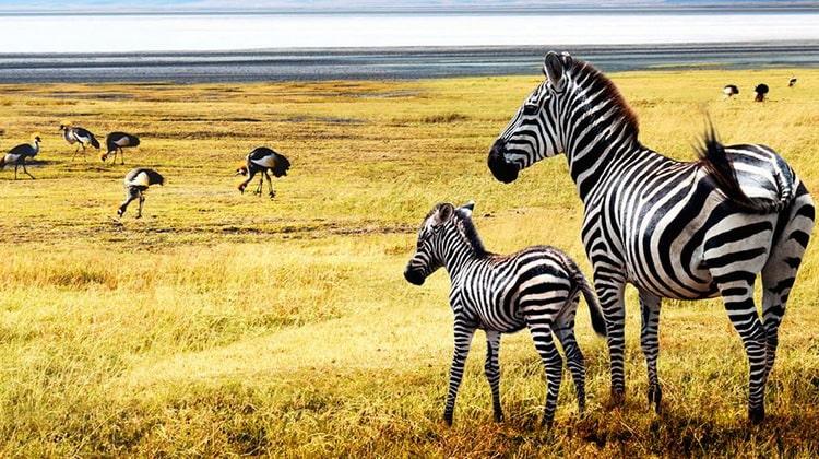 Nyika Discovery - Serengeti National Park Safari 05