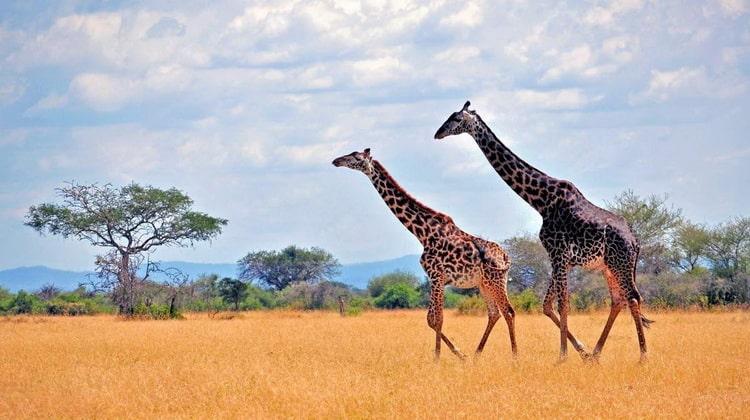 Nyika Discovery - Safari Destinations - Serengeti National Park Safari 06
