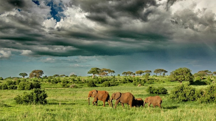 Nyika Discovery - Safari Destinations - Serengeti National Park Safari 07