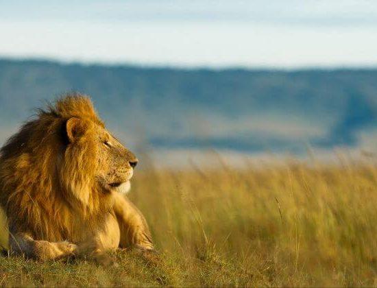Nyika Discovery - Serengeti and Ngorongoro 2 day safari 03