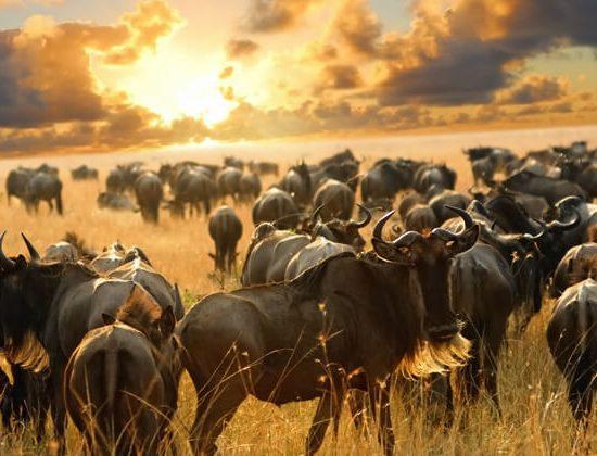 Nyika Discovery - Tarangire national park and Ngorongoro 2 day camping safari 03
