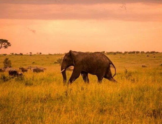 Nyika Discovery - Tarangire national park and Ngorongoro 2 day camping safari 05