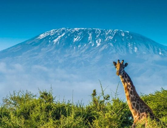 Nyika Discovery - 8 day Mount Kilimanjaro climb via Shira route 02
