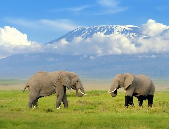 Nyika Discovery - 8 day Mount Kilimanjaro climb via Shira route 04