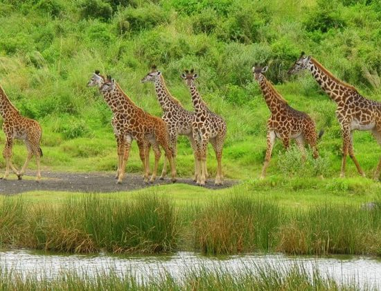 Nyika Discovery - Ngorongoro crater, Tarangire and Serengeti national park - 5 days luxury safari 05