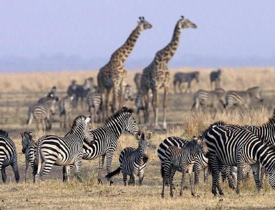 Nyika Discovery - lake Manyara, Tarangire, serengeti and Ngorongoro crater - 6 days mid range safari 02