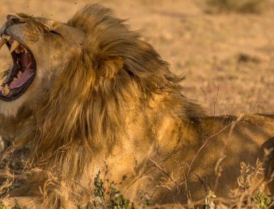 Nyika Discovery - lake Manyara, Tarangire, serengeti and Ngorongoro crater - 6 days mid range safari 03
