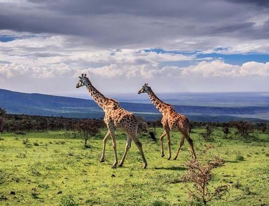 Nyika Discovery - lake Manyara, Tarangire, serengeti and Ngorongoro crater - 6 days mid range safari 04