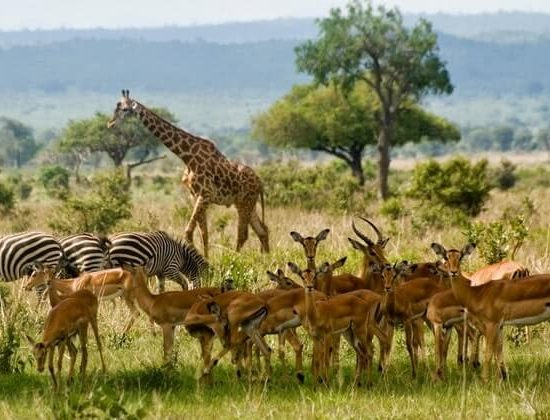 Nyika Discovery - Arusha national park, lake Manyara, lake Natron, Serengeti, Ngorongoro and Tarangire 9 days 04