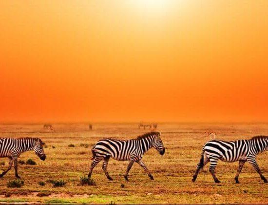 Nyika Discovery - Arusha national park, lake Manyara, lake Natron, Serengeti national park and Tarangire - 9 days mid range safari - 03