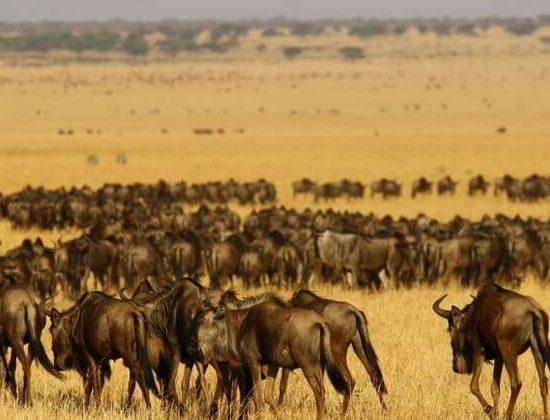 Nyika Discovery - Arusha national park, lake Manyara, lake Natron, Serengeti national park and Tarangire - 9 days mid range safari - 04