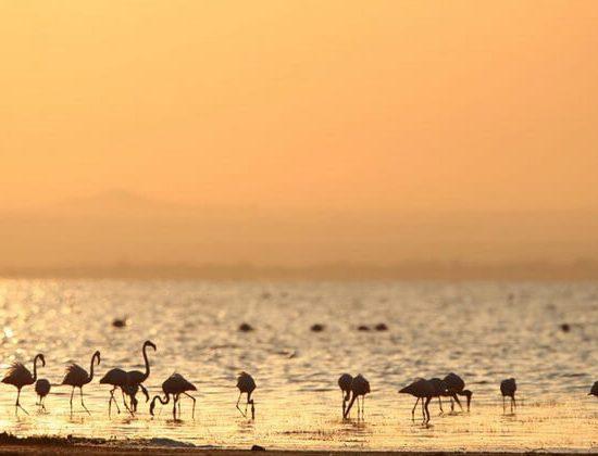Nyika Discovery - Arusha national park, lake Manyara, lake Natron, Serengeti national park and Tarangire - 9 days mid range safari - 06