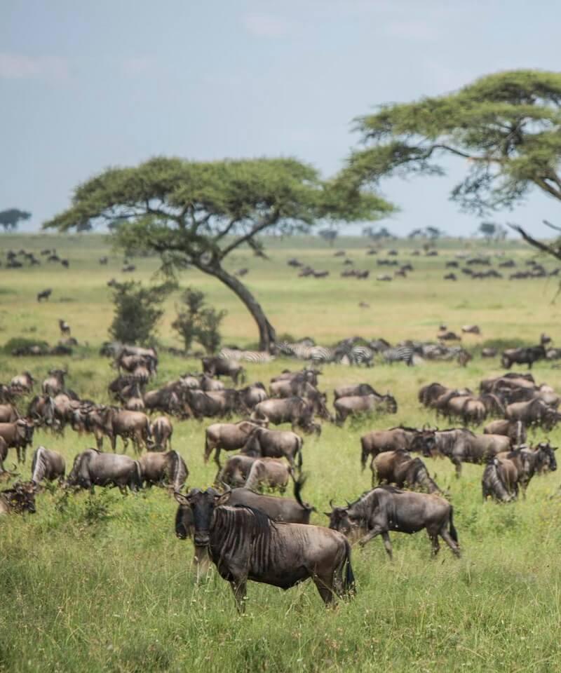 Nyika Discovery - Arusha national park, lake Manyara, lake Natron, Serengeti national park and Tarangire - 9 days mid range safari