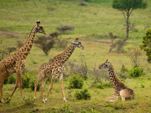 Nyika Discovery - Destinations - Arusha national park 4