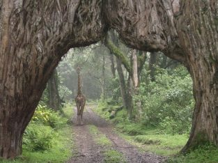 Nyika Discovery - Destinations - Arusha national park 5