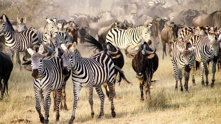 Nyika Discovery - Destinations - Ngorongoro conservation area 2