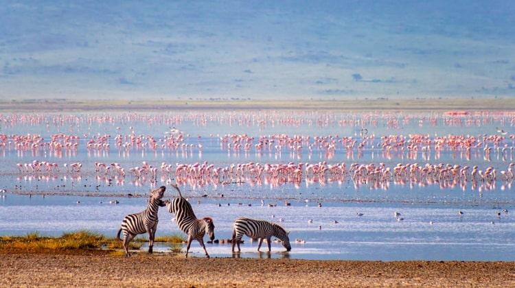 Nyika Discovery - Destinations - Ngorongoro conservation area 4