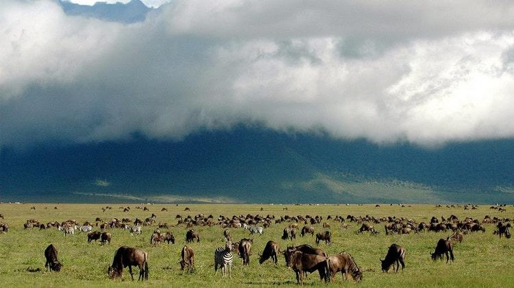 Nyika Discovery - Destinations - Ngorongoro conservation area 8