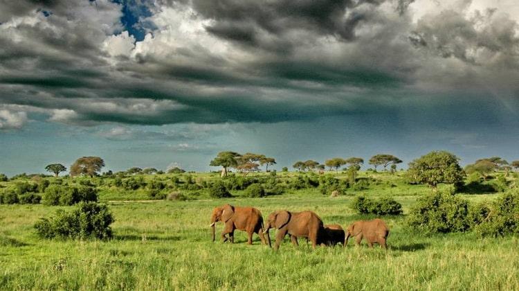 Nyika Discovery - Destinations - Tarangire national park 7