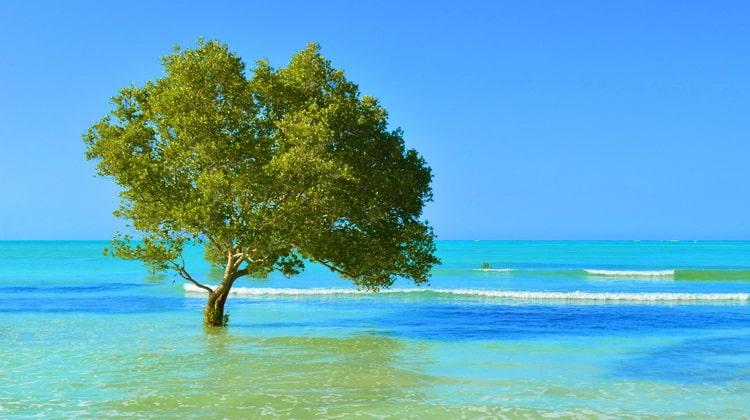 Nyika Discovery - Destinations - Zanzibar 3