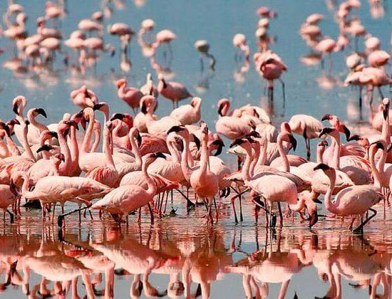 Nyika Discovery - lake Manyara, Serengeti, Ngorongoro crater and Tarangire 7 day mid range safari 02