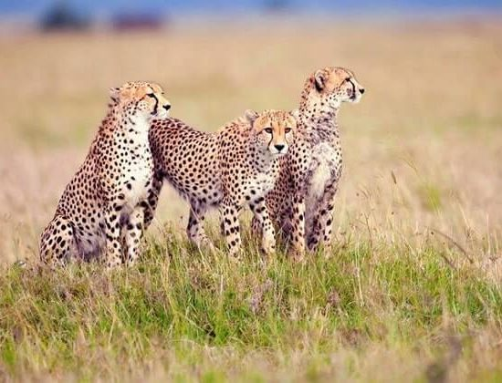Nyika Discovery - lake Manyara, Serengeti, Ngorongoro crater and Tarangire 7 day mid range safari 03
