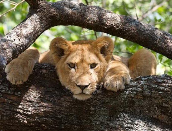 Nyika Discovery - lake Manyara, Serengeti, Ngorongoro crater and Tarangire 7 day mid range safari 04