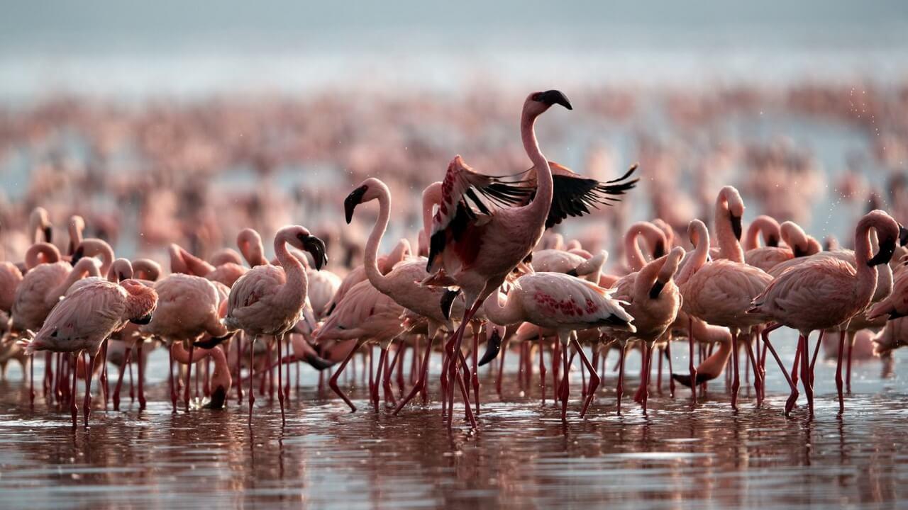 Nyika Discovery, Tanzania - Lake natron