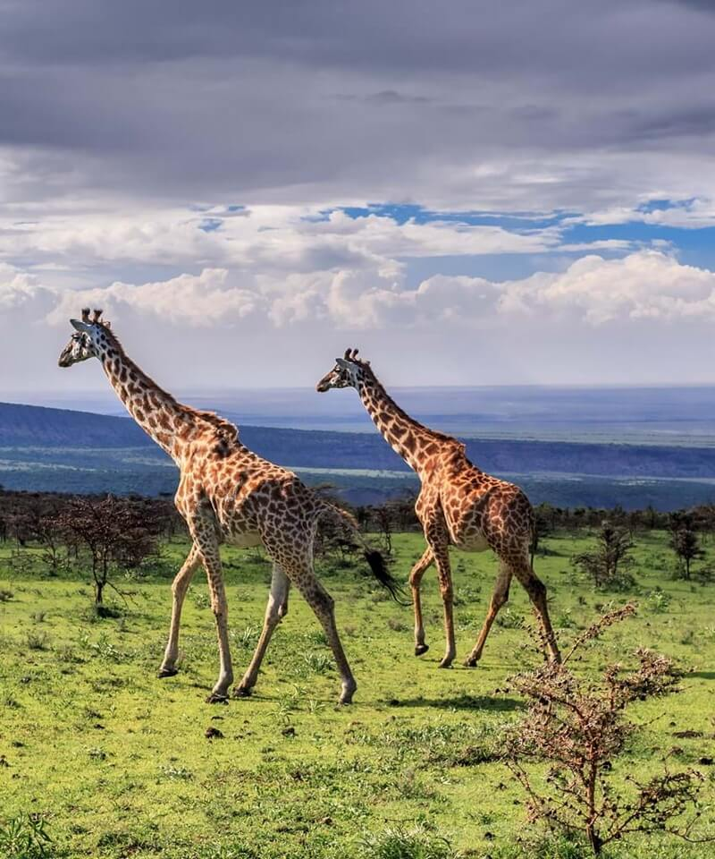 Nyika Discovery - Luxury Safari to Lake Manyara, Ngorongoro and Tarangire - 3 Days