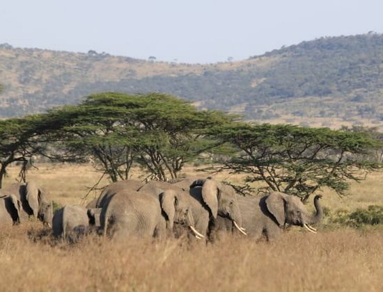 Nyika Discovery - Luxury Safari to Lake Manyara, Serengeti, Ngorongoro Crater and Tarangire - 5 Days 02