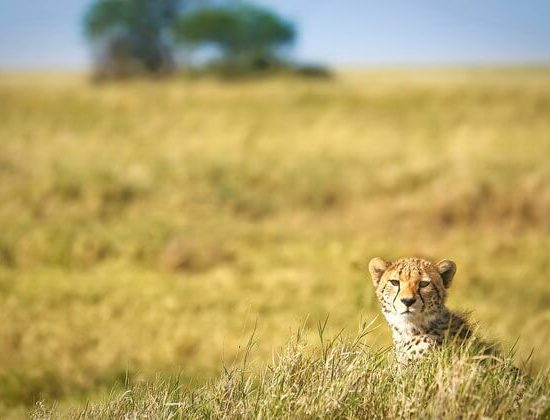 Nyika Discovery - Luxury Safari to Lake Manyara, Serengeti, Ngorongoro Crater and Tarangire - 5 Days 04