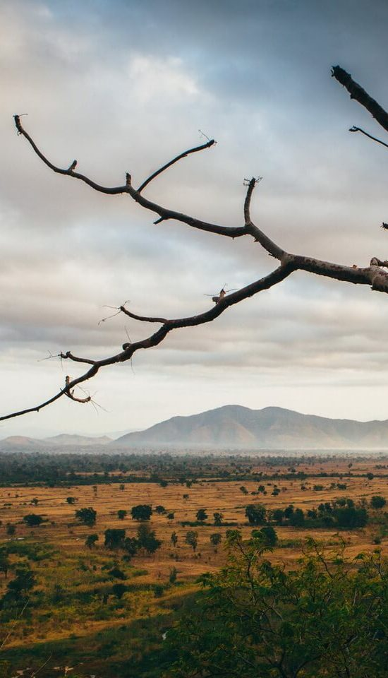 Nyika Discovery - Lake Manyara, Tarangire, Ngorongoro and Serengeti 4 day safari
