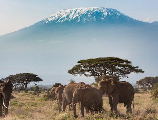 Nyika Discovery - Mount Kilimanjaro Lemosho route 8 days 03