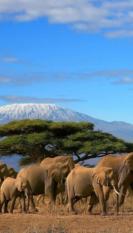 Nyika Discovery - Mount Kilimanjaro Lemosho route 8 days 1