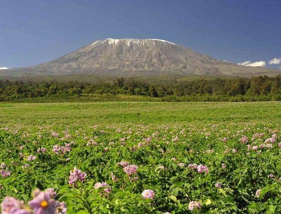 Nyika Discovery - Mount Kilimanjaro Lemosho route 9 days 03