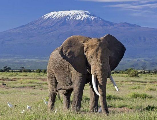 Nyika Discovery - Mount Kilimanjaro Machame route - 7 days 02